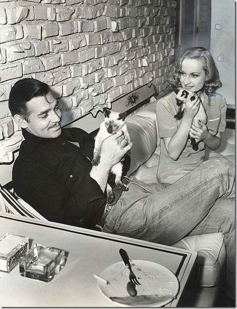 Clark Gable, jego biedna kobieta i koty