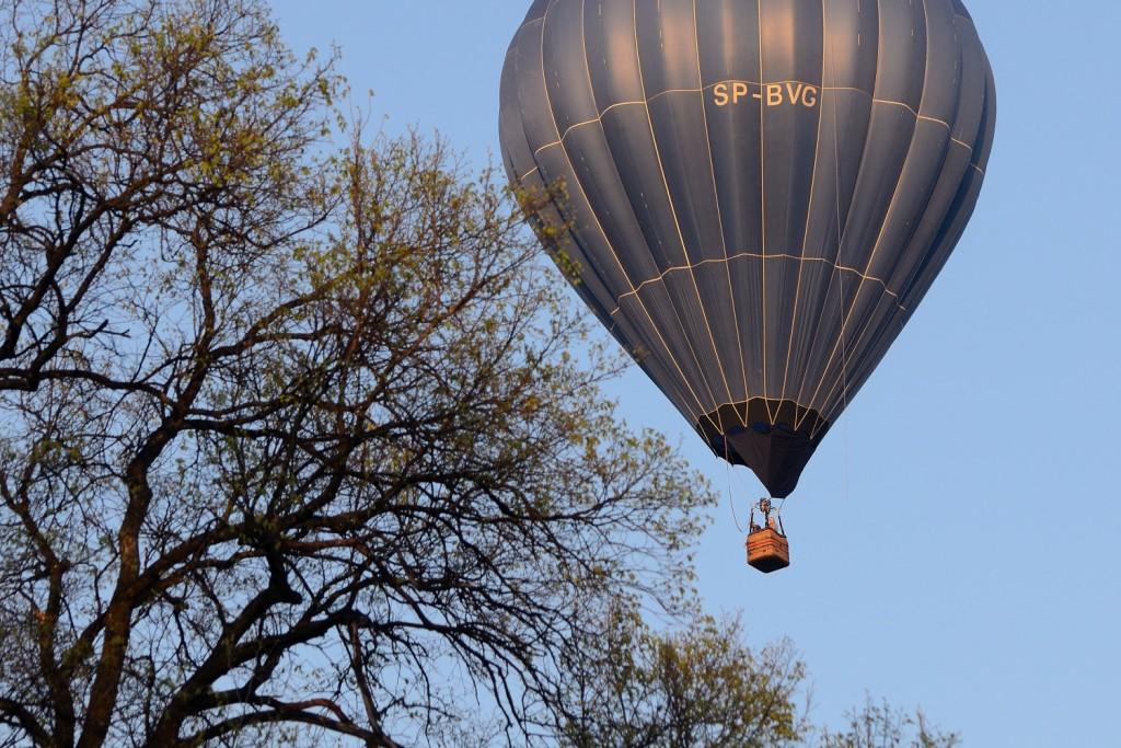 balon lecący nisko, tuż nad wierzchołkami drzew