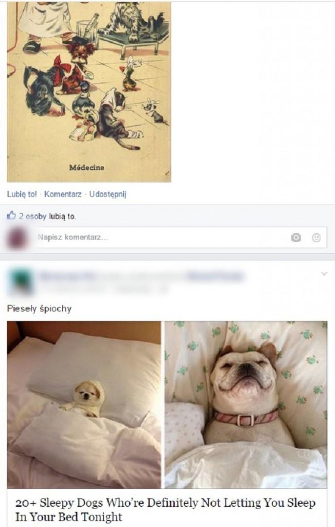 irytujące grafiki wstawione na Facebook'a: zdjęcia psów