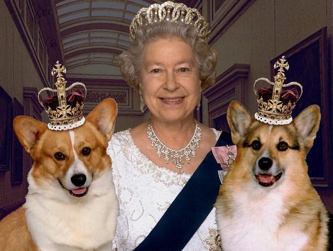grafika: Elżbieta II i pieski corgi