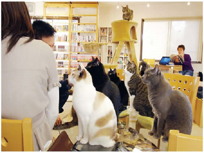 restaurants-cat-cafe-nekorobi